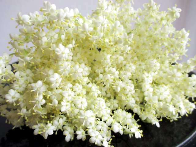 Black elderflower