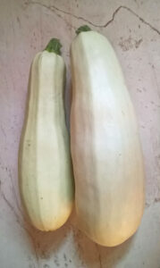 White summer vegetable marrow squash